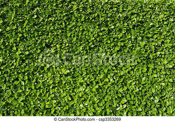 Banque de photographies de laurier feuilles haie vert for Tarif taille de haie au noir