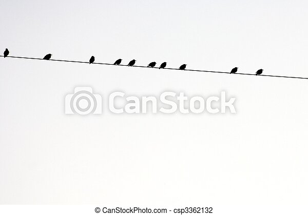 birds - csp3362132