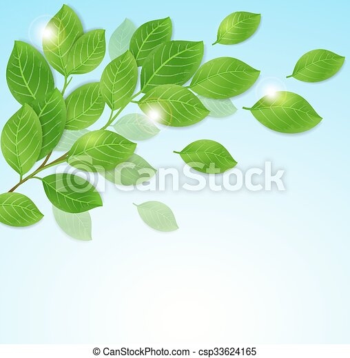 Branch with green leaves - csp33624165