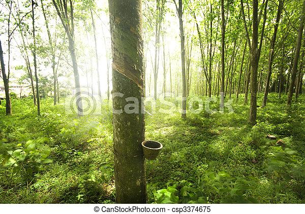 橡膠, 樹 - csp3374675