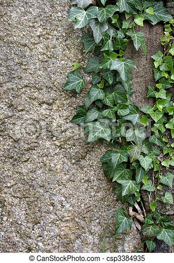 Plants on rock