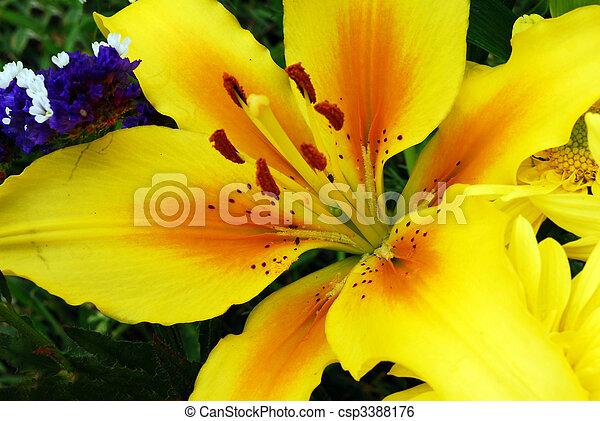 Image de jaune amaryllis fleur closeup isol jaune for Amaryllis jaune