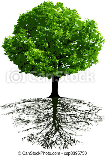 Trees with roots - csp3395750