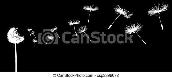 dandelion in the wind - csp3396072