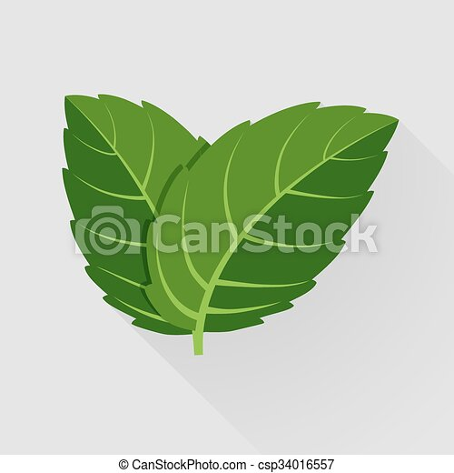 Mint illustrations and clipart 19779  Can Stock Photo