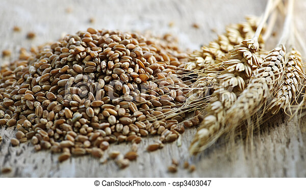 Whole grain wheat kernels closeup - csp3403047
