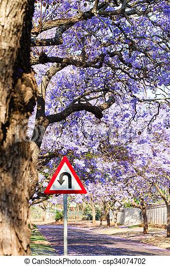 U-turn warning road sign between purple jacaranda trees - csp34074702
