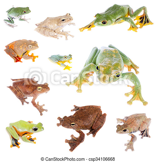 Flying tree frogs set on white - csp34106668