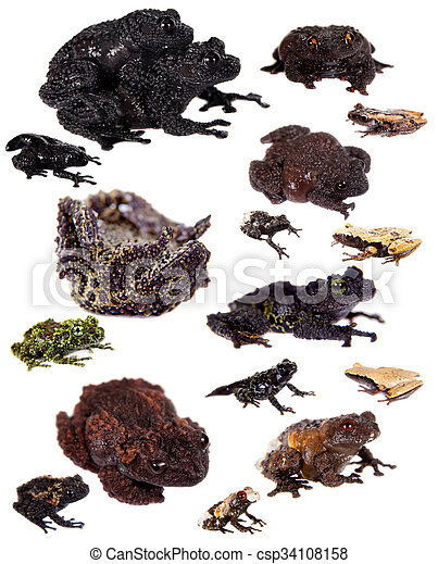 Mossy Frogs set on white - csp34108158