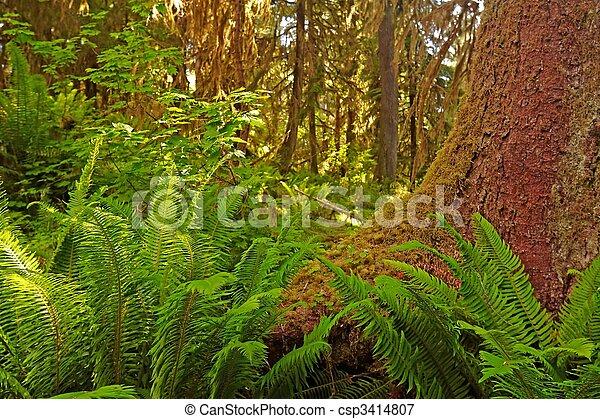 Rain Forest - csp3414807