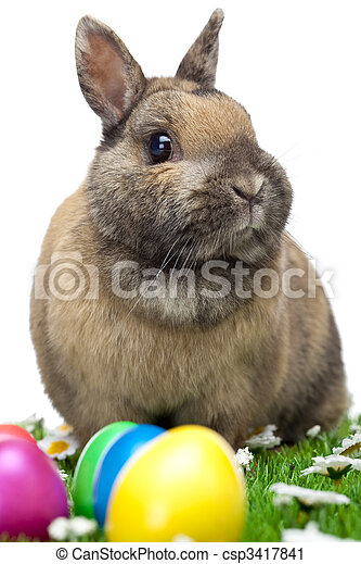 Easter bunny sitting in flower meadow with Easter eggs - csp3417841