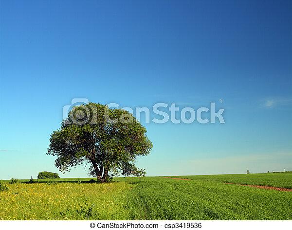 single tree in summer field - csp3419536