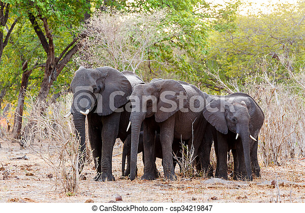 A herd of African elephants at green bush, Caprivi Game Park, Namibia. True wildlife photography