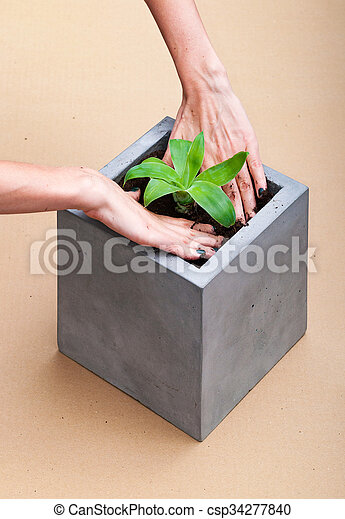 Plant in a  square concrete pot - csp34277840