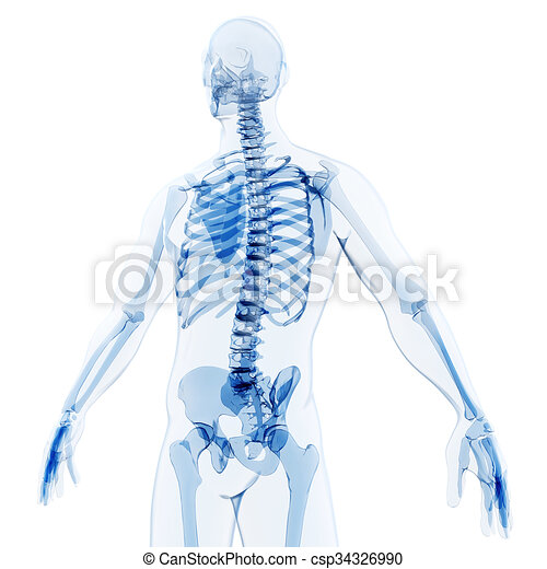 3d render of human body and skeleto - csp34326990