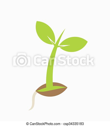 Vector of Young plant seedling germination. Vector illustration ...