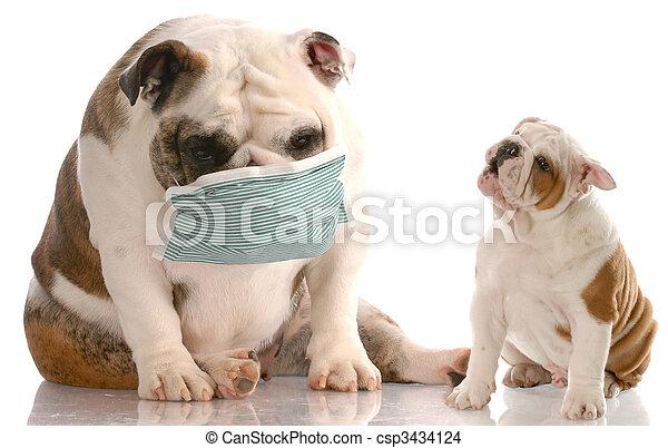 健康, 動物世話 - csp3434124