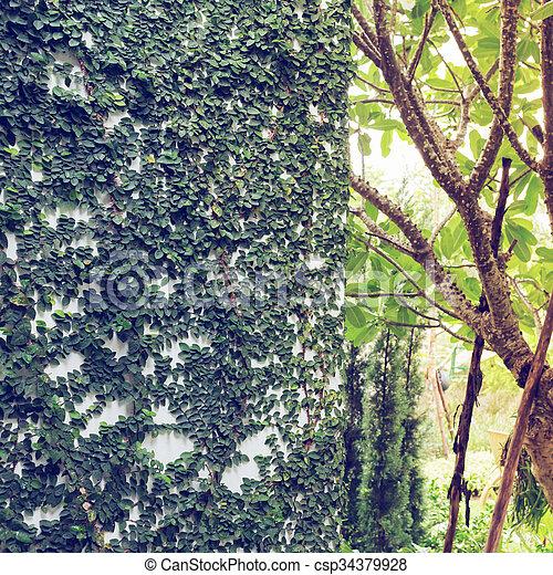 Stock fotos de natural, jardín, pared, mortero, hiedra, diseño ...