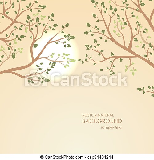 Sunset on a background of tree branches - csp34404244