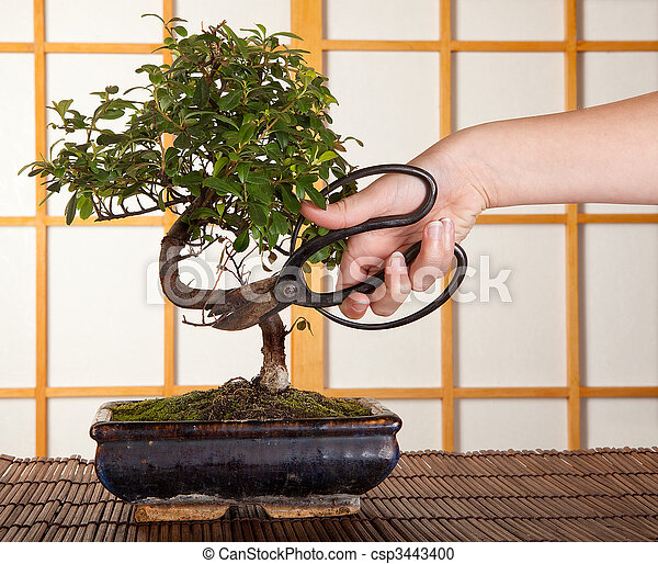 stock fotografie von bonsai schneiden hand schneiden a bonsai baum in csp3443400. Black Bedroom Furniture Sets. Home Design Ideas
