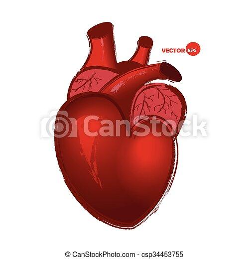 Vecteur clipart de vrai coeur biologie croquis coeur - Dessin du coeur humain ...