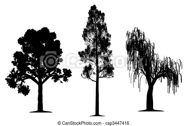 Oak, forest pine and weeping willow tree - csp3447416