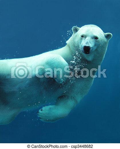 極地, 特寫鏡頭, 熊, 水下 - csp3448682