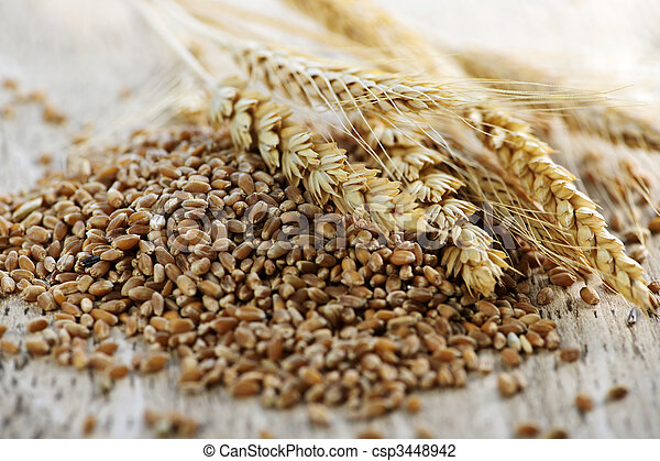 Whole grain wheat kernels closeup - csp3448942