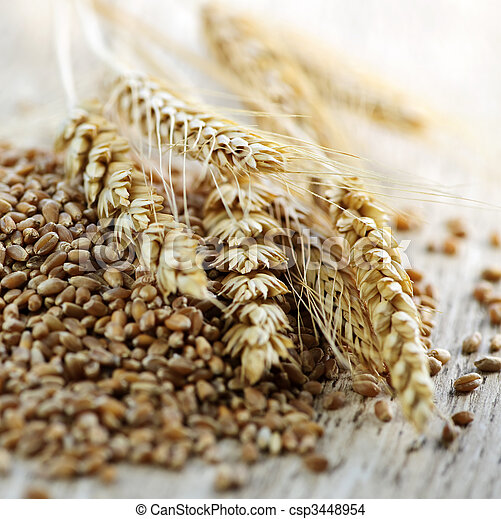 Whole grain wheat kernels closeup - csp3448954