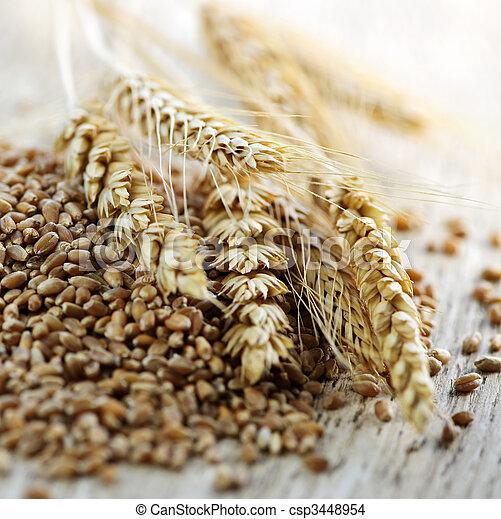 Whole grain wheat kernels closeup - csp3448954