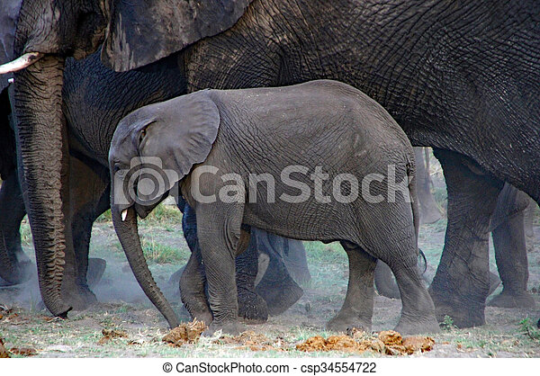 Elephant, photo taken during a safari in Namibia.