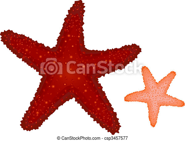 Red and Coral Starfishes - csp3457577