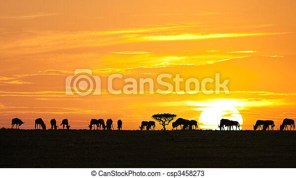 African sunrise - csp3458273