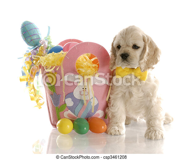 easter puppy - csp3461208
