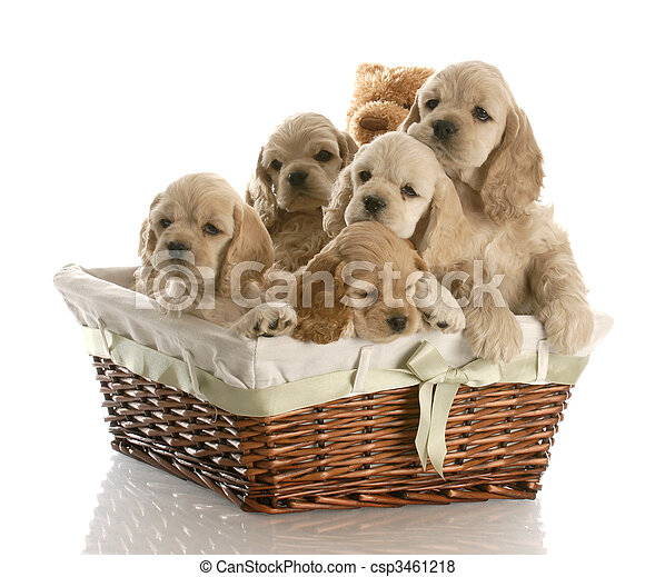 litter of puppies - csp3461218