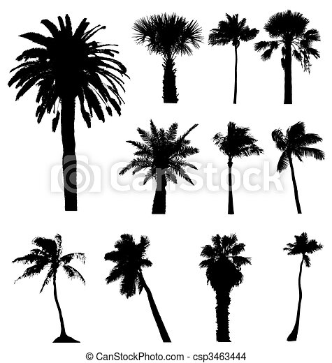 Collection of vector palm trees silhouettes. Easy to edit, any size. - csp3463444