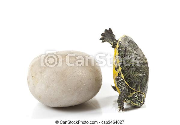 Reptile - turtle