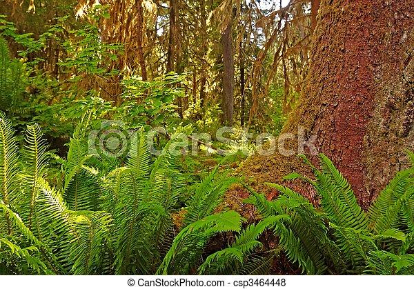 Rain Forest - csp3464448