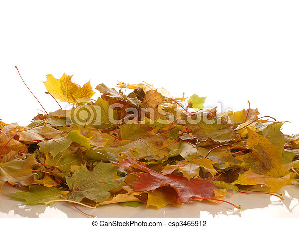 colorful autumn leaves isolated on whited background - csp3465912