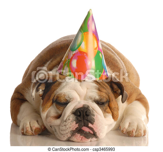 english bulldog wearing birthday party hat isolated on white background - csp3465993