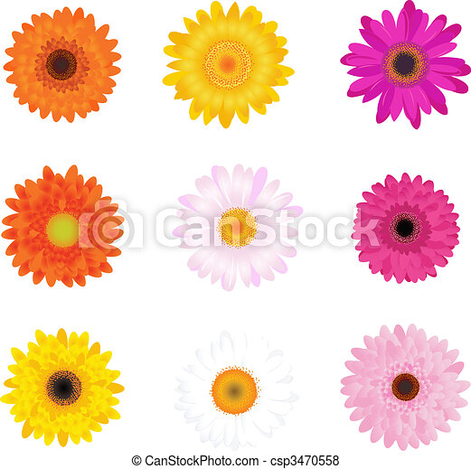 Colorful Daisies - csp3470558