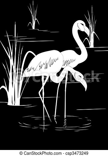 Flamingo on lake - csp3473249