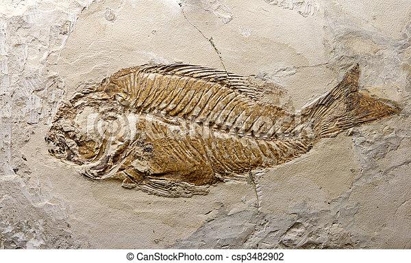 fossil fish - csp3482902