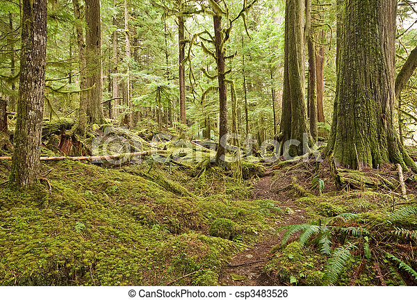 Pacific Northwest Rain Forest - csp3483526