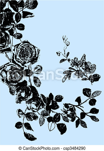 rose plant illustration drawing - csp3484290