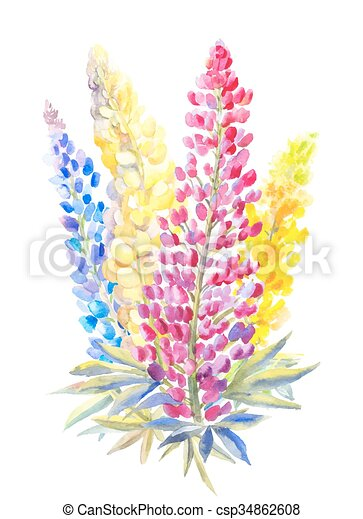 vector clipart of bouquet of lupine in watercolor