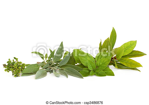 Thyme, Sage, Oregano and Bay Herbs - csp3486876