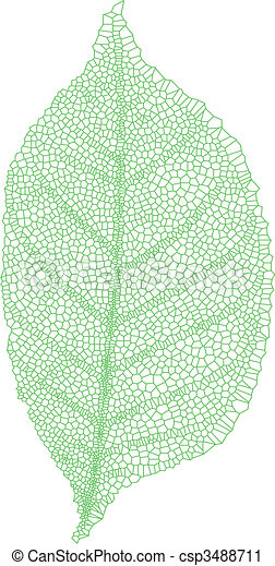 leaf vein - csp3488711