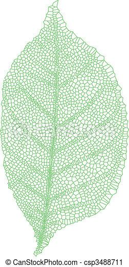 leaf vein - csp3488711