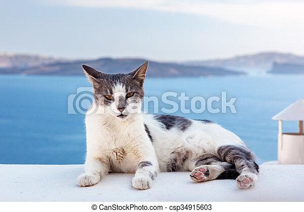 Cat lying on stone wall in Oia town, Santorini, Greece. Aegean sea  - csp34915603